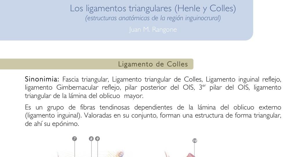 Cuadernos de Anatomía Quirúrgica: Los ligamentos triangulares (Henle ...