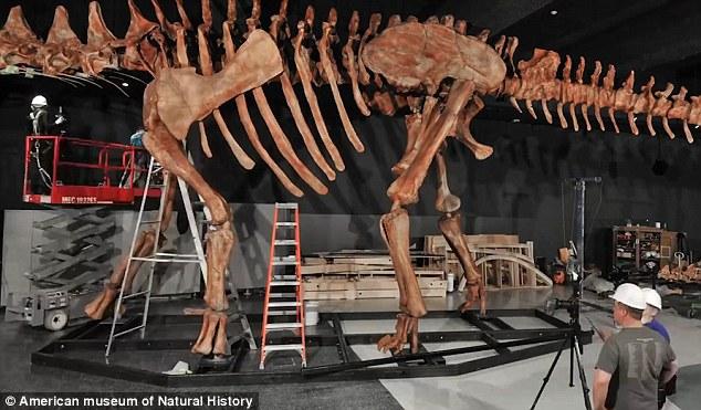 Individual Sized Dinosaur Cakes Pan Wilton Ideal To Decorate