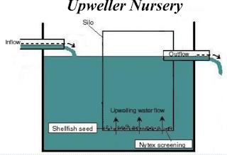upweller phtoto
