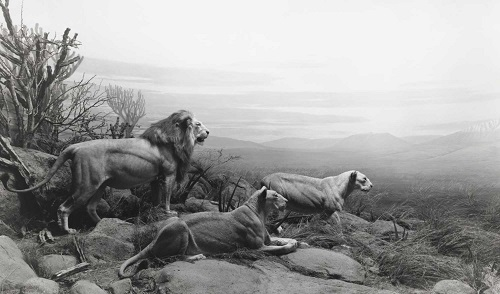 Hiroshi Sugimoto | fotos en blanco y negro chidas, imagenes de leones