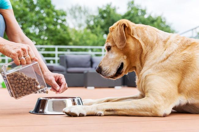 Karma Nutrilove dla psa