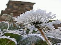 """Mengenal """"bun upas"""" Fenomena Embun Salju di Pegunungan Dieng"""