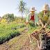 Prefeitura de Boa Hora está oferecendo cursos para qualificar produtores rurais