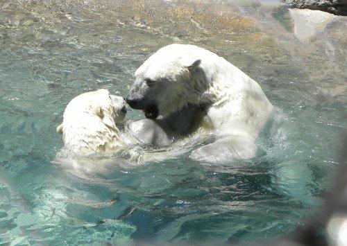 rio grande zoo, albuquerque zoo