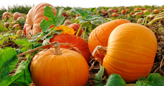 25 Benefits of Pumpkins Which Are Important For Health And Beauty - Healthy T1ps