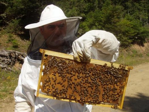 Υποχρεωτική η δήλωση μελισσοκόμων στην Αιτωλ/νία