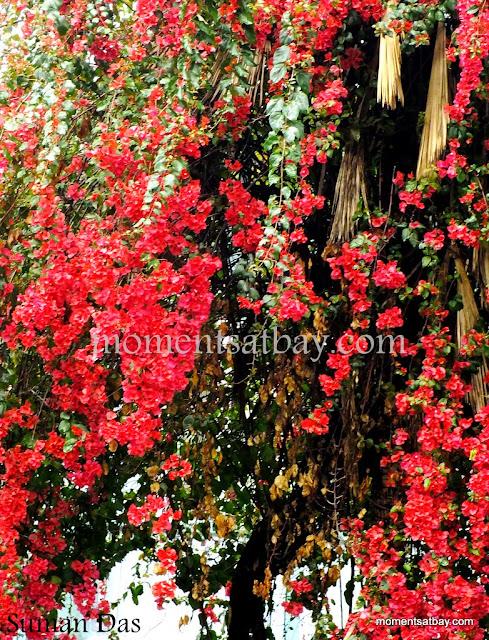 Garden momentsatbay