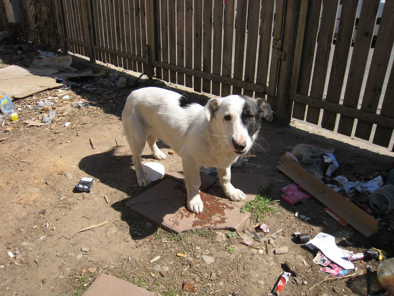 Romanian Stray Dogs Ploiesti - RSDP: One sad little doggie ...
