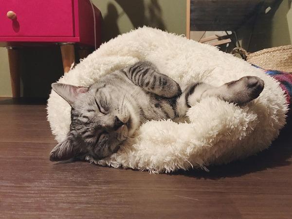 寝袋に包まれて気持ちよさそうに寝ているサバトラ猫