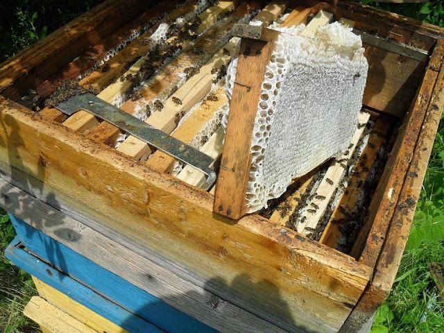 Πόσα κιλά μέλι μπορεί να μαζέψει ένα μελίσσι;