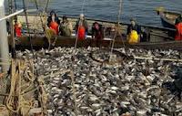 Промишлен улов на риба