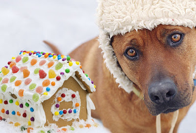 Dog wearing a hat next to a gingerbread house