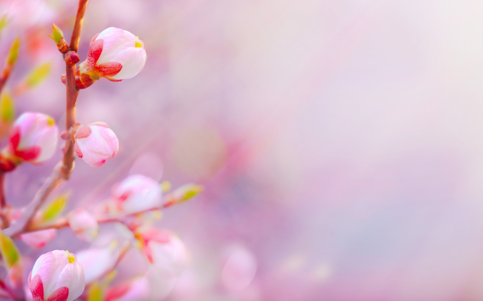 Lovely peach blossom PPT background