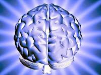 The Brain | Alzheimer's Reading Room