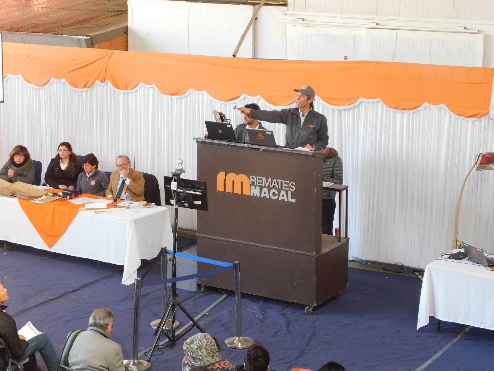 Remates Macal inaugurará la mayor y más moderna sucursal de ...