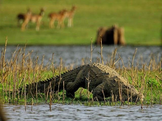 Nagarhole National Park - Karnataka