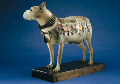 Stubby-War-Dog-Smithsonian-Memorial