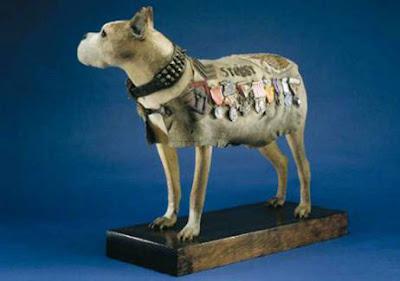 Stubby-War-Dog-Smithsonian-Memorial