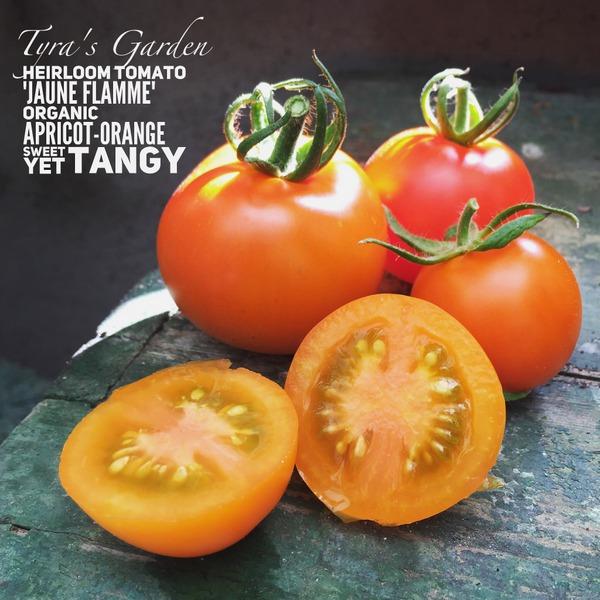 """Jaune Flamme Tomato"""