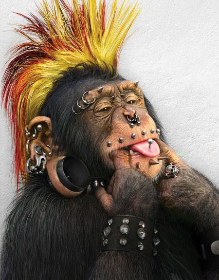 hilarious monkeys - photo #31