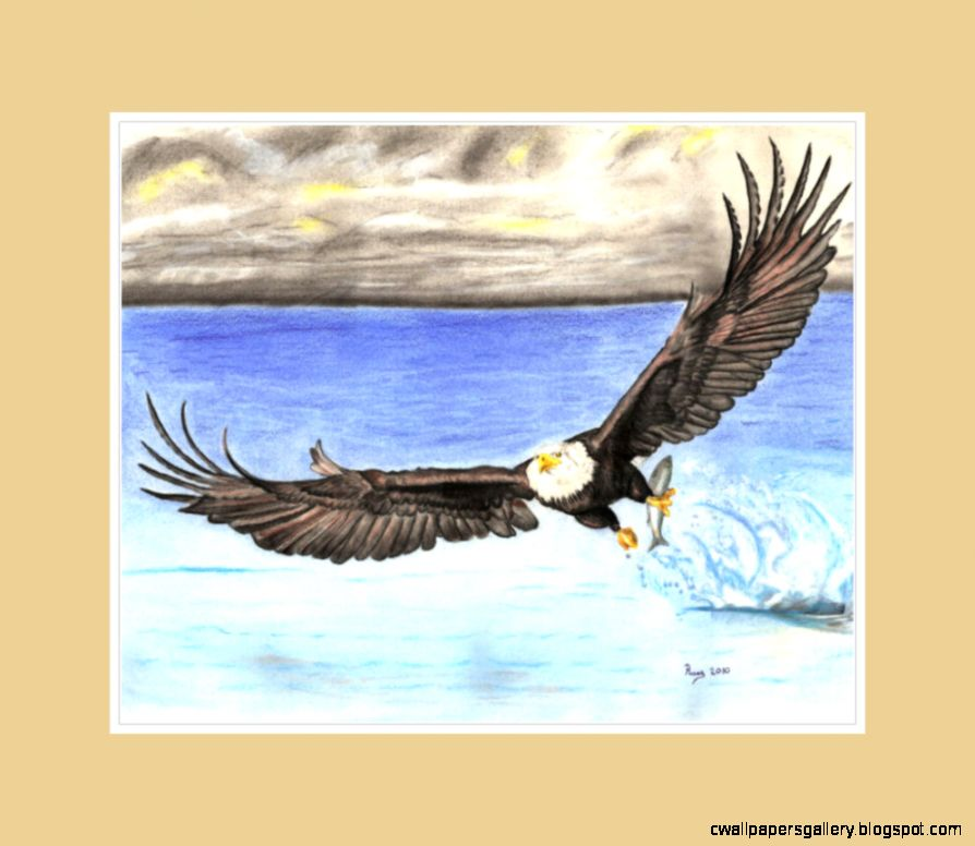 Eagle Drawing Color   Gallery