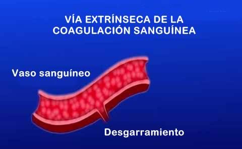 Vía extrínseca de la coagulación sanguínea