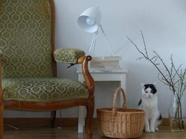 Urlaub Schweiz mit Hund Bloggerfreunde Kanton Bern Katze Lesesessel