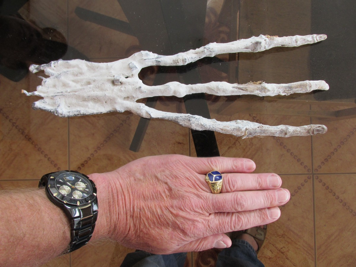 "Experts Proved ""Alien"" Hand Found in Peru is Clearly Not Of Human Origin"