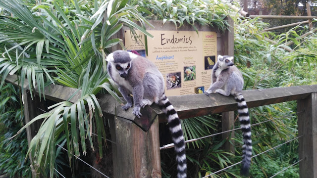 Two lemurs sitting on a wooden ledge in front of leafy green plants