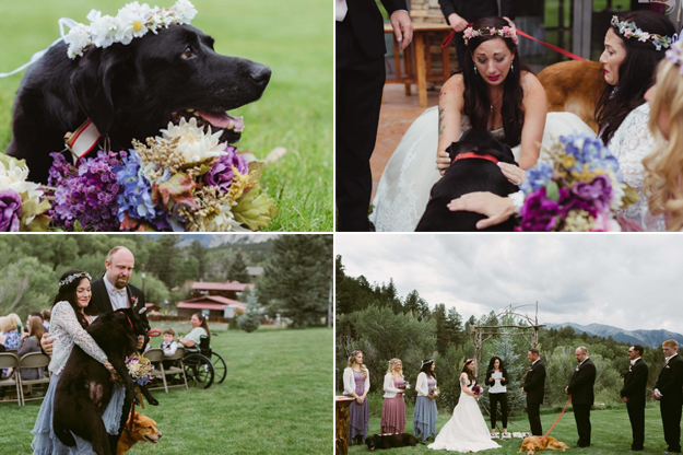 15-Year-Old Dog Passed Away Because Of Cancer, Lived Long Enough To See His Master's Wedding! HEART WARMING!