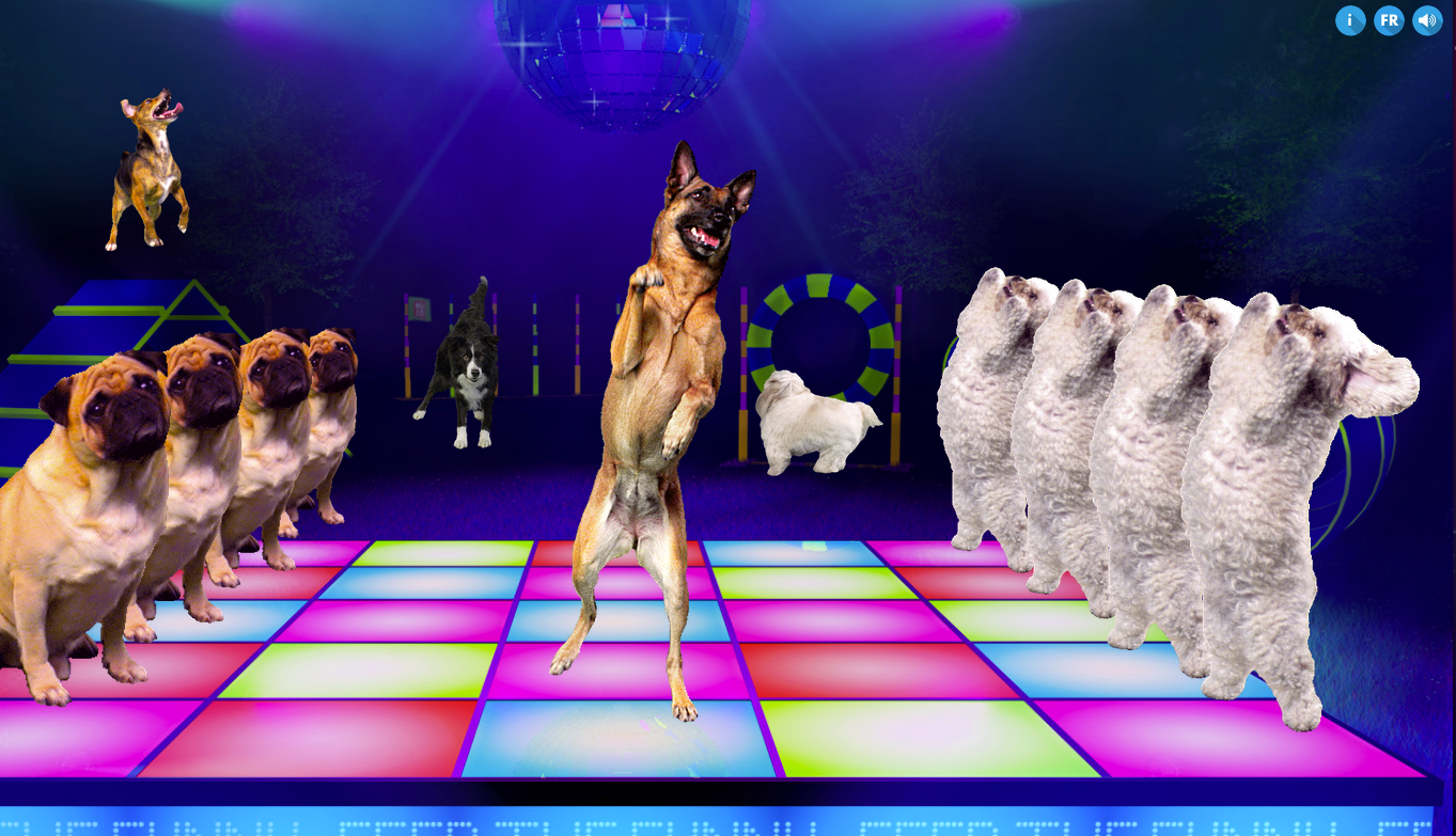 Q Dog Dance Once you have created your own