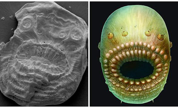 Saccorhytus: Man Evolved From This Alien Sea Creature Found In China