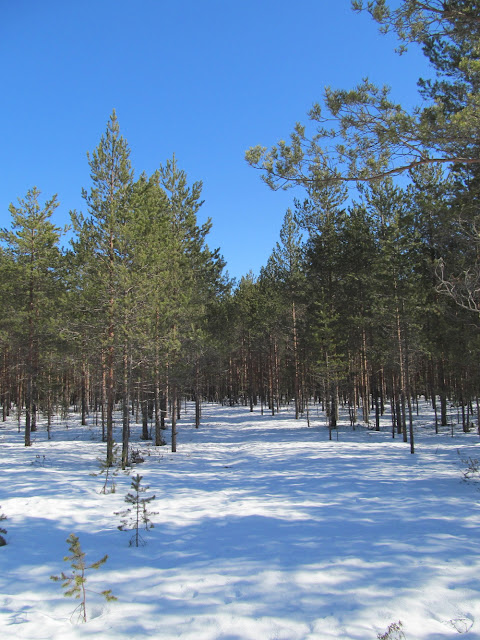 лес в марте
