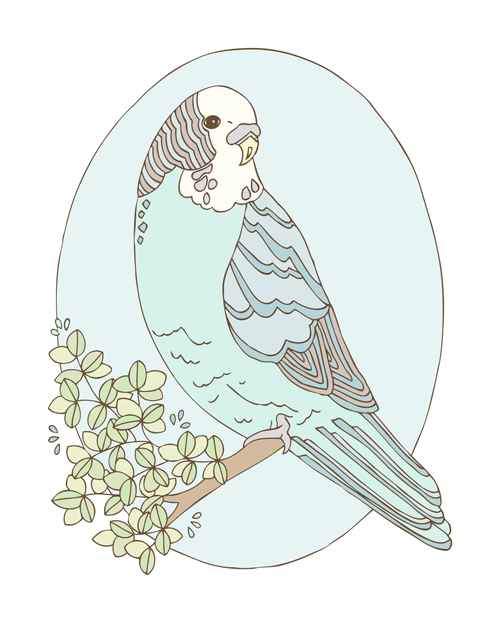 Emma Margaret Illustration Bear Parakeet 2016