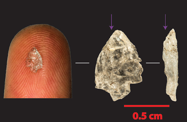 From Stone Age chips to microchips: How tiny tools may have made us human