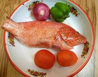 Tomato grouper Cambay Tiger