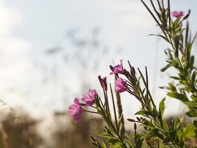 wildflowers in the sunshine