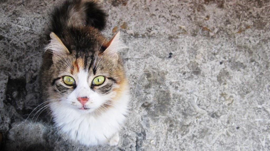 59ea172ac4fa για την κοινωνική αριστερά  Πολιτισμός είναι να κατανοείς τη γάτα