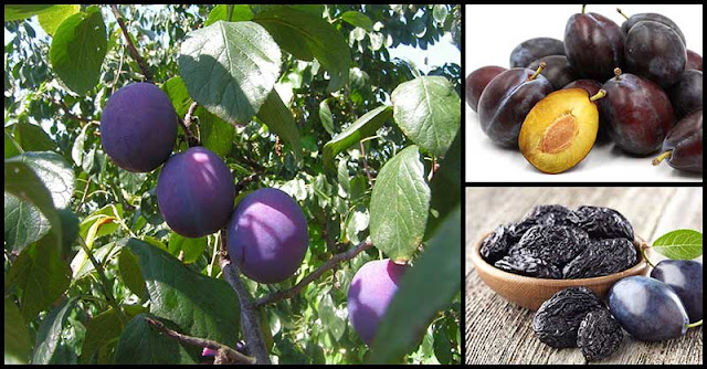 Prunes' Benefits For Our Heart, Vision, And Digestion