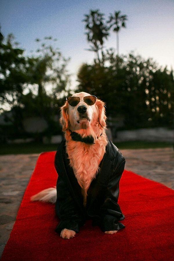 Un perro con traje