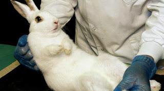 ilmuan,sains,laboratorium, dan kelinci
