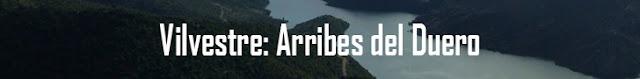 http://www.naturalezasobreruedas.com/2016/09/vilvestre-arribes-del-duero.html