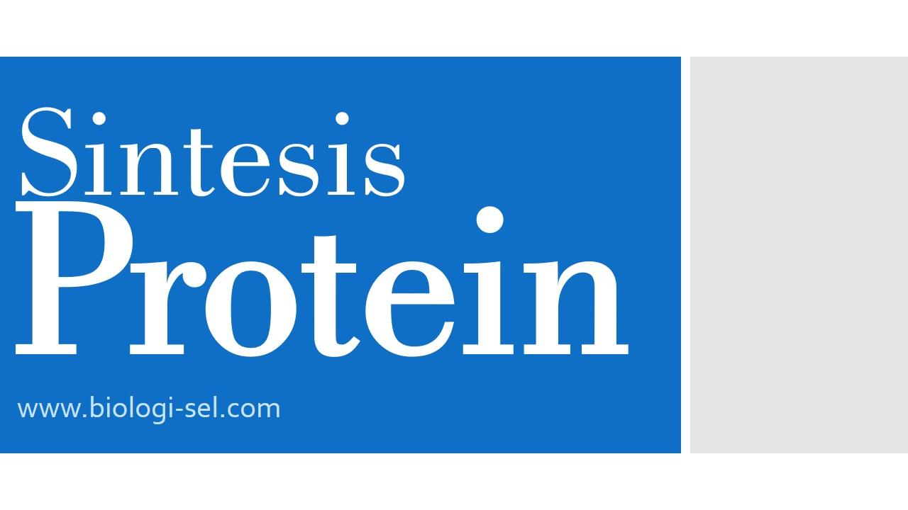 Sintesis protein dan kode genetik biologi sel sintesis protein merupakan proses pembentukan protein dalam tubuh ccuart Image collections