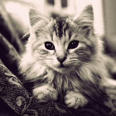 Cute Cats Kitty Pets 05