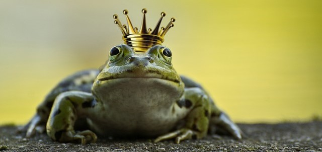 Frog with a King's Crown
