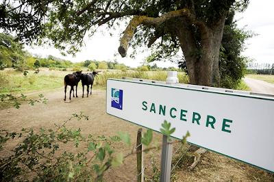 blog vin Beaux-Vins vins Sancerre