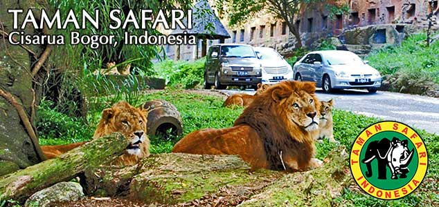 Rental Elf Ke Taman Safari Puncak