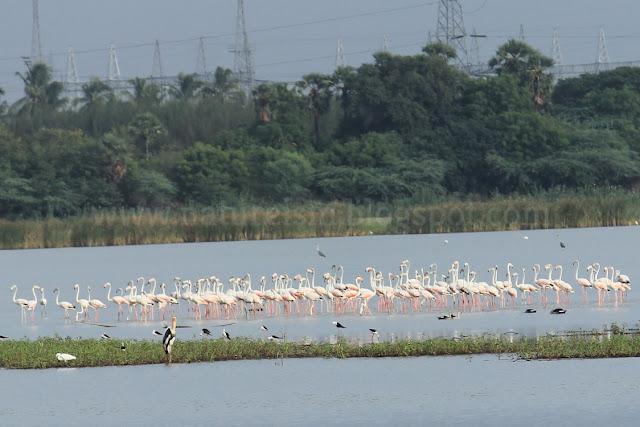 Huge birds flocking around - Ousteri lake part 1