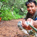 Selfie With SriLankan Junglefowl