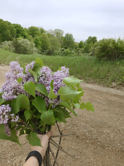 lilac michigan grown wild forage flowers